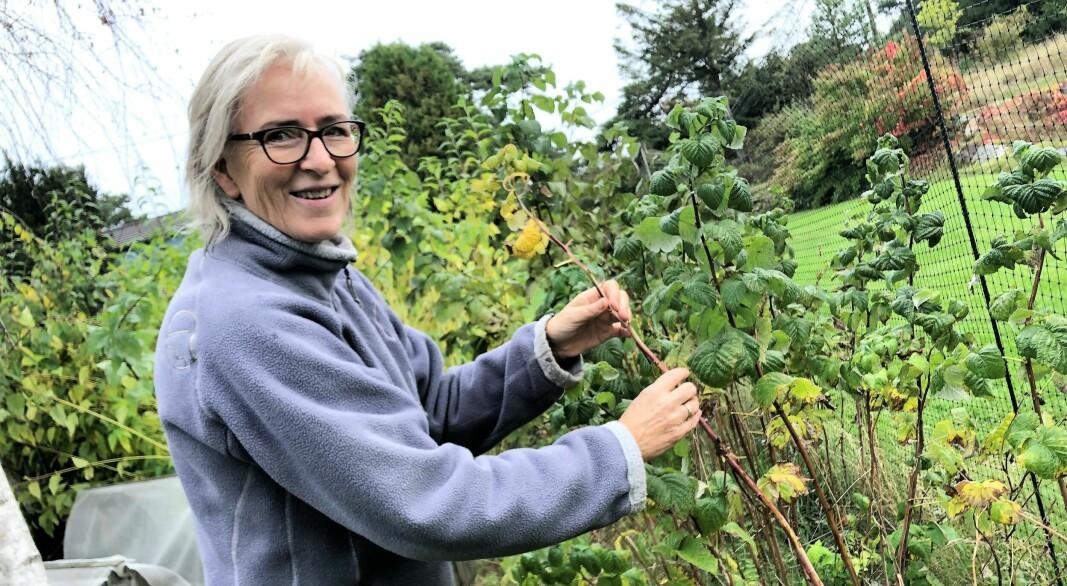 Det er høst – dette bør du gjøre med hagen din